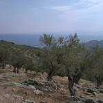 23.08.2013 Lesbos Greece (3)
